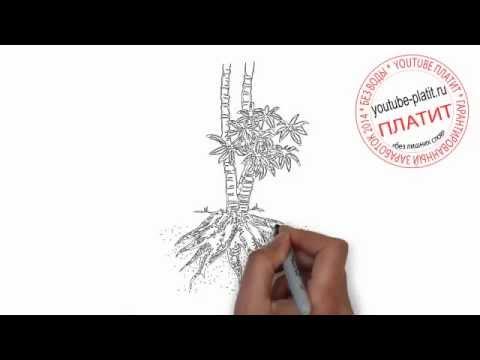 Видео как нарисовать корень