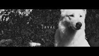 download lagu Javae - Stay Down gratis
