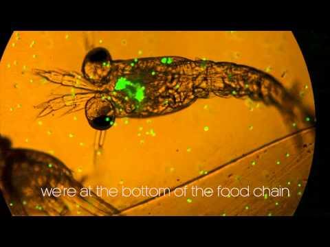 plankton eat plastic