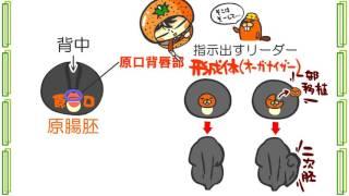 生物3章6話「誘導のしくみ」byWEB玉塾