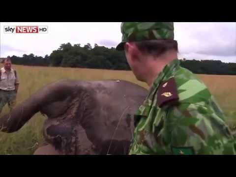 Head Cut Off Video Elephant Head Cut Off by