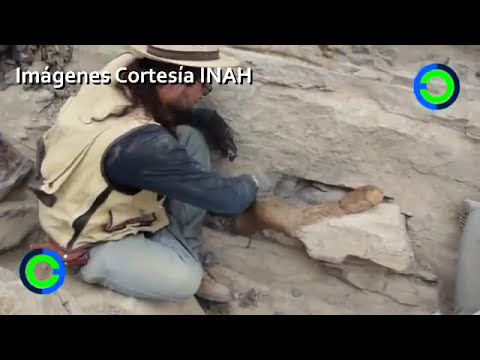 Descubren cola de dinosaurio en Coahuila, México