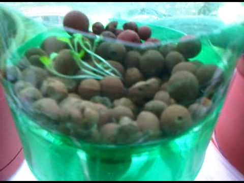 2 Liter Plastic Bottle Hydroponic Wick System How To