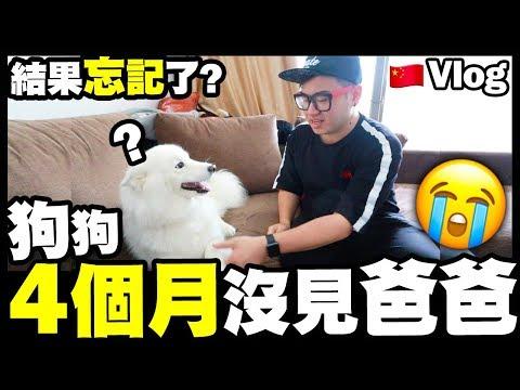 【Vlog】狗狗4個月沒見爸爸...結果忘記了