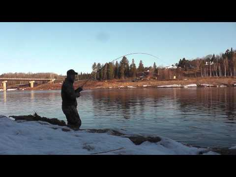 2013 Miramichi Black Salmon fishing