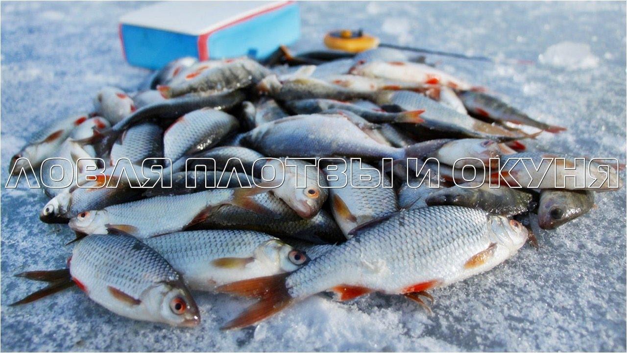 Зимняя рыбалка кириково плотва