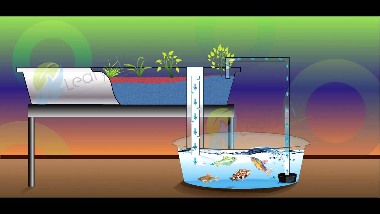 Simple Flood And Drain Aquaponics System Youtube