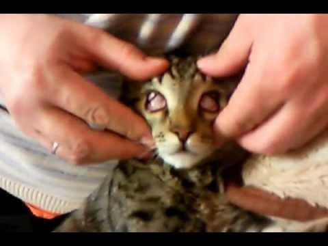 У кошки слезится один глаз лечение в домашних условиях