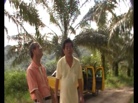 Organic Solution to Sustainable Oil Palm Farming - Pro-Fil Sawit B & F - Test Result 4 Years