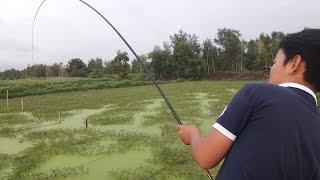 Câu Cá Giải Trí Như Này Mới Thích || Fishing