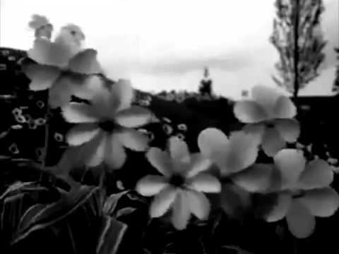 I Teletubbies in bianco e nero