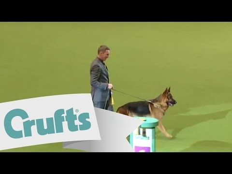 dfs Crufts 2011 Best in Group Pastoral