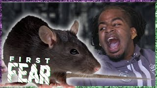 KEIZER op de VLUCHT voor RATTEN    FIRST FEAR