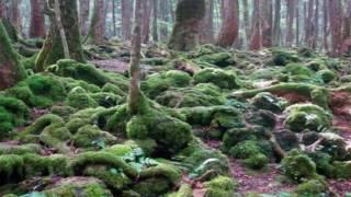 ভয়ানক  এক জঙ্গল, যে জঙ্গলে গেলে ফিরে আসা যায় না!Suicide forest