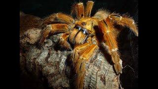 🕷 Unboxing 2 angry tarantula (OBT) - I think I shit myself!
