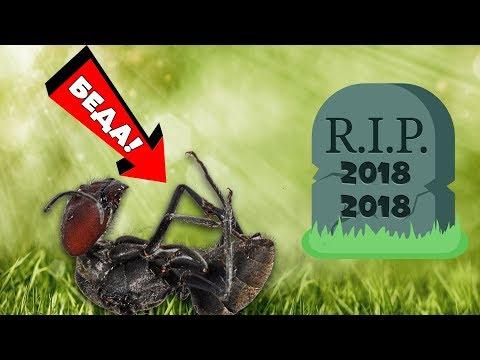 Хищные муравьи возвращаются или всё кончено???