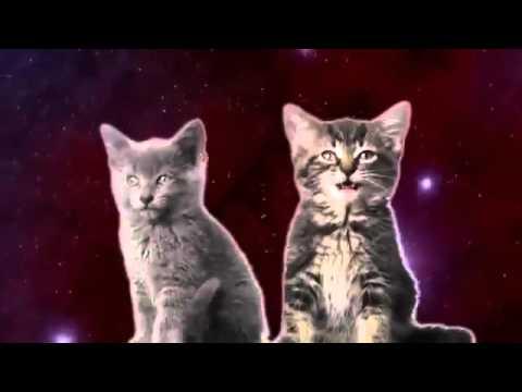 Кошки танцуют и поют
