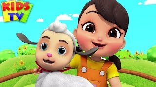 Mary Had A Little Lamb | Boom Buddies Children Songs & Baby Rhymes - Kids TV
