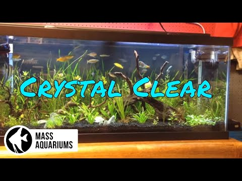 How to Keep CRYSTAL CLEAR water in your AQUARIUM/ Clean Fish Tank Water