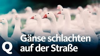 Experiment: So reagieren Passanten aufs Tiere-Schlachten    Quarks