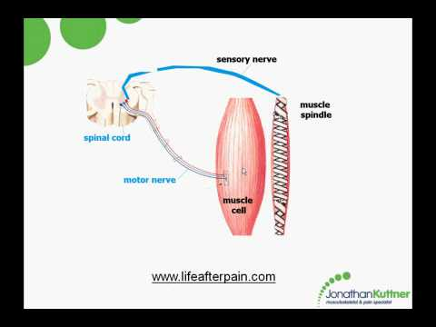 Myofascial Trigger Points Causes And Treatment Youtube