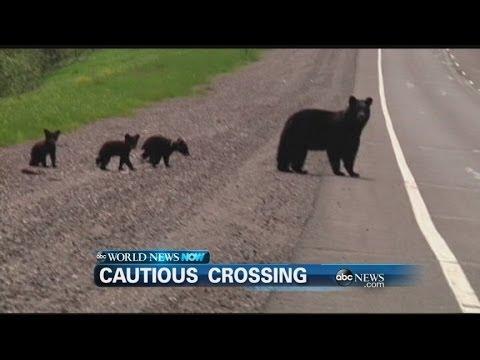 WEBCAST: Three Bears Take a Hike