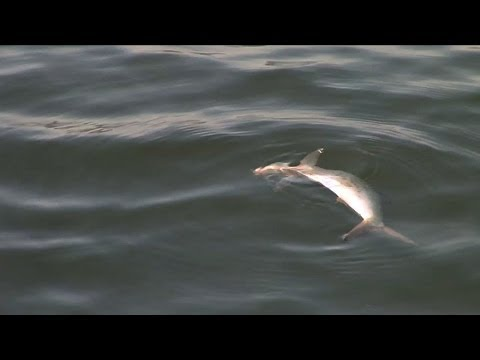 Officials Investigate Fish Kill in Shark River
