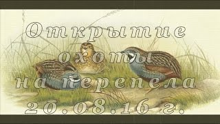 Открытие охоты на перепела с дратхаарами в Ростовской обл. 2016 г. hunting for quail