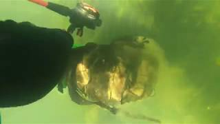 Found 3 guns in the Etowah River Scuba diving, Sheriff's Called