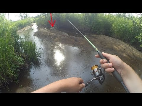 #15 Необычные случаи на рыбалке!