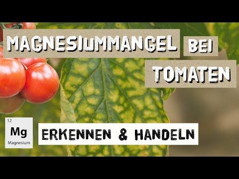 Magnesiummangel bei Tomaten - Erkennen und Handeln - Expertenwissen