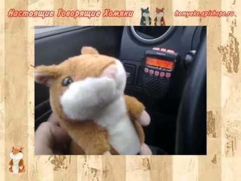 povtoryayushiy-homyak-video