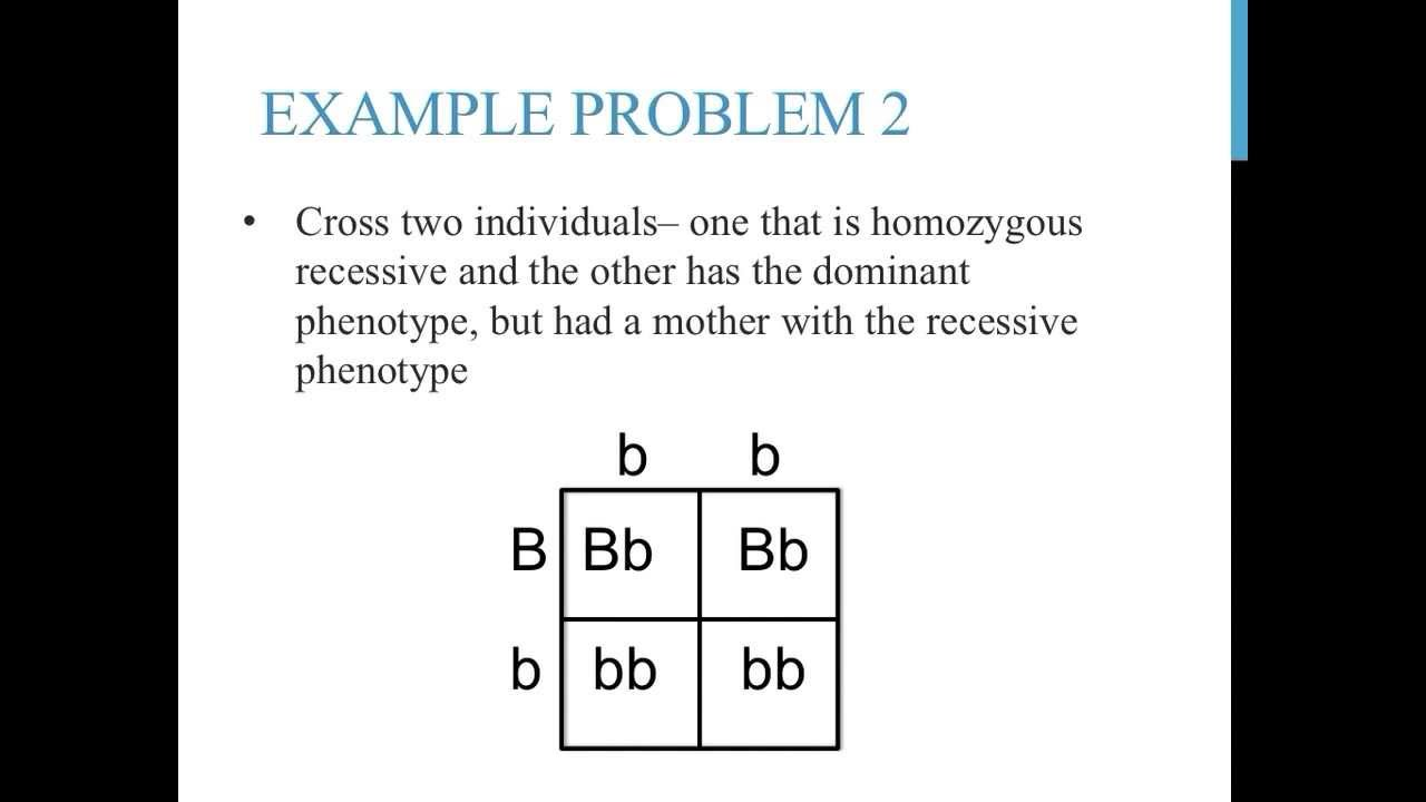 genetics practice worksheet