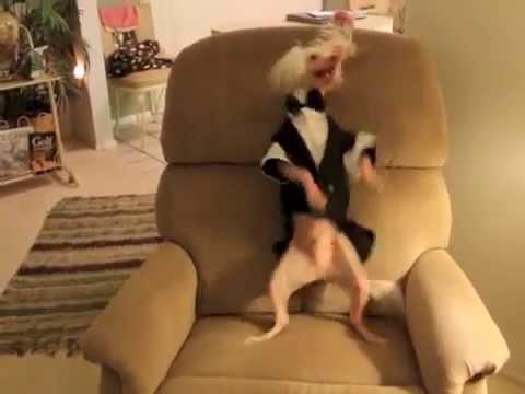 Hairless Dancing Nathan : cupid Shuffle video