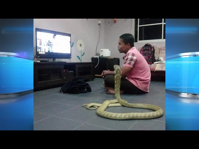 Man Marries Pet Snake?!