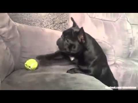 Dog Who Fail at Being Dogs Simon Desue Dogs Who Fail at