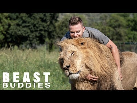 Lion King: 23-Year-Old Is Best Friends With Big Cats   BEAST BUDDIES