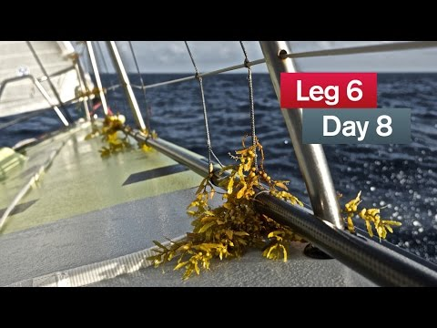 Gains, losses and a lot of seaweed | Volvo Ocean Race 2014-15