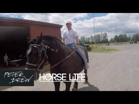 Birthday Month Vlog 21 : Horse Life
