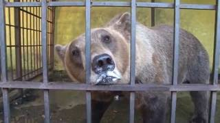 RESCUED: No more beer for bear Tomi