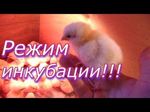 Режим инкубации куриных яиц // Выведение цыплят в инкубаторе / Инкубация в домашних условиях