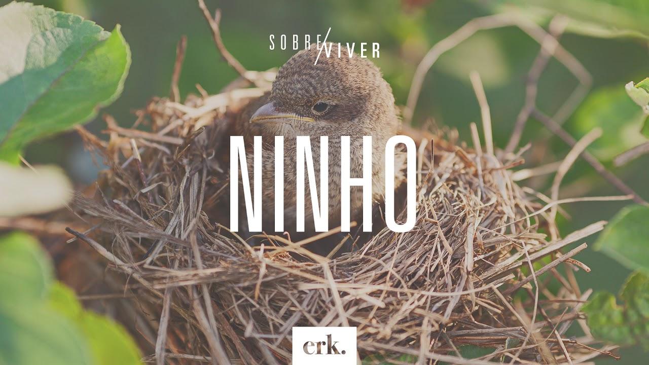 Sobre Viver #330 - Ninho / Ed René Kivitz