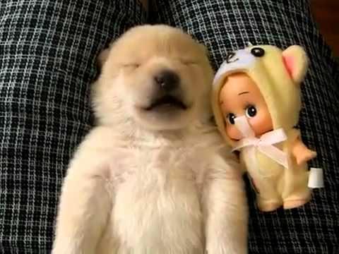 Dog Sleep Barking