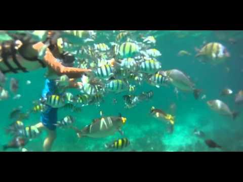 Summer 2012 Snorkeling In Thailand.mov