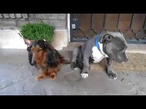 La culpa de dos perritos que rompieron la zapatilla de su dueño
