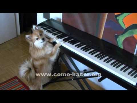 El mejor pianista del mundo canino - Videos de perros