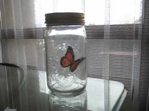 Butterfly in a Jar  *SPOILER ALERT*