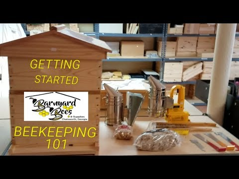 Beekeeping for beginners and what you need to get started