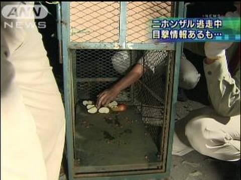東山動物園のサル逃げ出す けさ捕獲作業を再開(09/10/14)