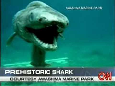 Prehistoric shark, BREAKING NEWS